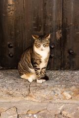 Cat sitting in front of a old door