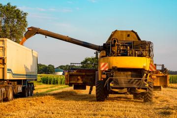 Fotoväggar - big combine harvester threshing in the sunset.