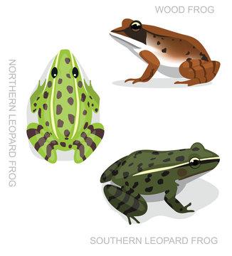 Frog Leopard Frog Set Cartoon Vector Illustration