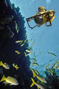 Middle East Egypt Red Sea Black spot Snapper Lutjanus ehrenbergi COMPOSING>submarine