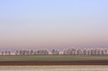 Wintry landscape, frost-covered trees and field, Thuringia, Germany, Europe