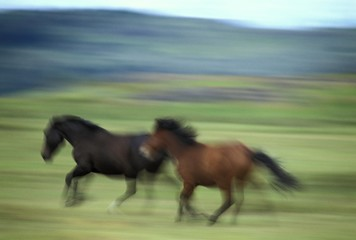 Running Horses - Patagonia - Argentina