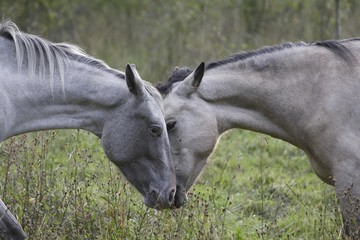 Two mares neck and neck
