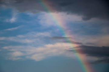 bright rainbow on the background saturated storm clouds against the dark sky, dark blue tint