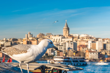 View of famous Galata tower with seagull in Istanbul