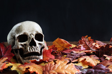 Halloween human skull lying in autumn leaves with free copy space for text against a black background.