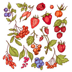 Different fresh berries, set of vector color drawings.