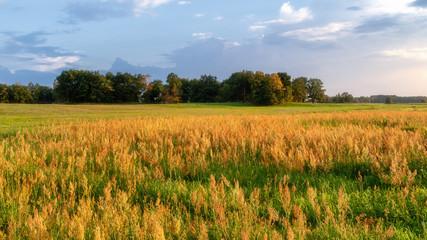 Lato nad łąkami