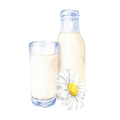 Hand drawn watercolor glass and bottle of milk with daisy flower on white background. Realistic food illustration.