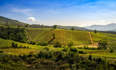 vinyage Chile