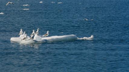 Seagulls in an Iceberg