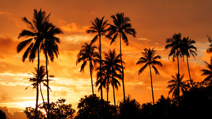 CLOSE UP: Towering palm trees stretch out into the summer evening sky in Tahiti.