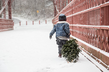 Boy holding small Christmas tree by fence