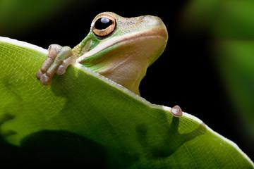 Tree frog shadow