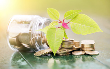 Economy, saving concept  - coins stacks -  making money with green leaf and jar
