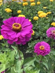 flower nature yellow garden orange plant green bloom red flora summer