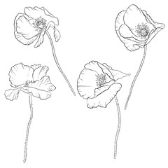 vector set of drawing poppy flowers
