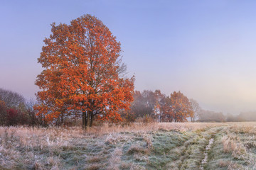 Autumn landscape. Amazing fall in november. Morning autumnal nature. Cold meadow with hoarfrost on grass and red foliage on trees. Colorful autumn. Scenery nature at sunrise on clear morning.