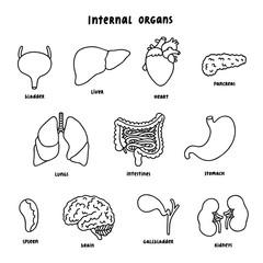 Internal organs outline set