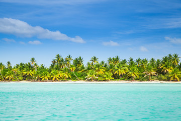 Papiers peints Caraibes Palms trees grow on the beach of Saona