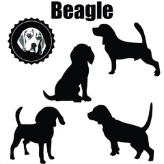 Vector Beagle Dog Silhouette.The various operations of beagle