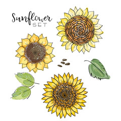 Sunflower seed, flower vector drawing set. Handdrawn isolated illustration. Food ingredient for oil packaging design,label, banner,poster, print, wedding card. Colorful summer sketch, watercolor style