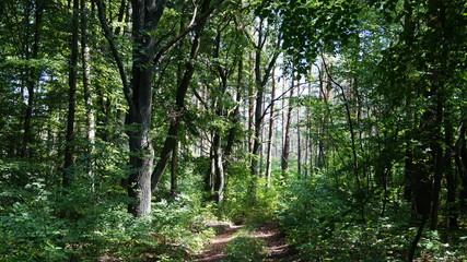 forest_road_20