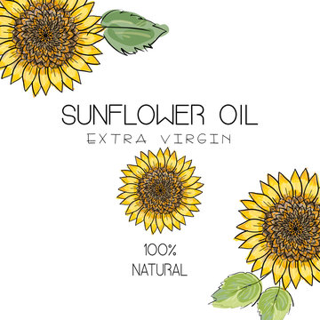 Vector illustration with 3 handdrawn sunflowers on white background. Design for sunflower oil, sunflower packaging, natural cosmetics, health care products