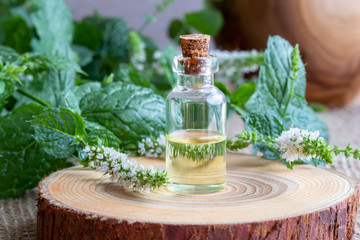 A bottle of peppermint essential oil with fresh blooming peppermint