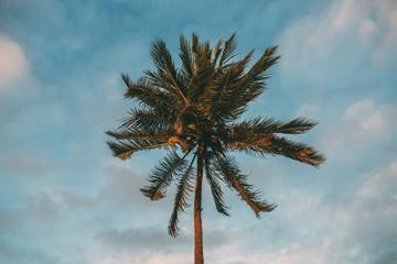Salvador palm tree