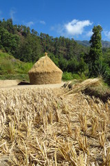 Harvested rice field in front of the pile of rice straw drying under the Nepalese sun, Num, Nepal