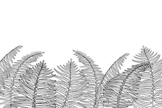 Vector horizontal composition of outline fossil forest plant Fern with fronds in black isolated on white background. Drawing of contour Fern with ornate leaf for summer design or coloring book.