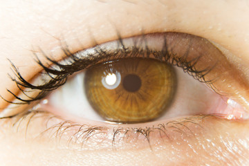 macro photo of brown eye