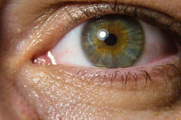 macro picture green eye