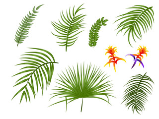 Tropical palm leaves botanical vector illustration, set isolated on white background.