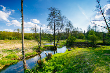 Forest edge near small river in countryside. Blue sky in background