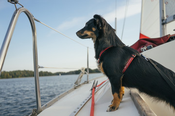 Dog on a Boat.