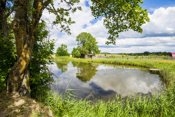 View of the small pond of a country farm on a clear summer day, Latvia