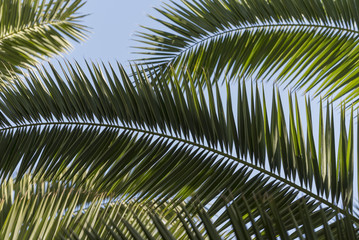 Close-up of palm fronds, Majorelle Gardens, Marrakesh, Morocco, North Africa, Africa