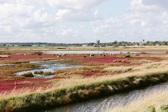 Suffolk marshland with sheep and a distant castle and church.