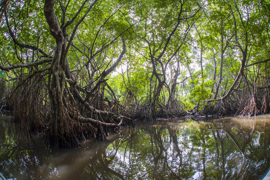 Mangrove Forest and River on Boat Trip, Ahungalla, Galle District, Southern Province, Sri Lanka