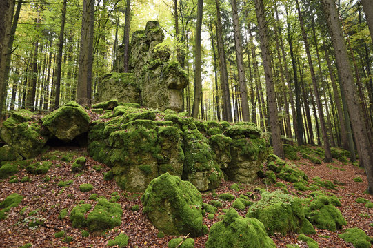 Moss covered rocks in a European beech (Fagus sylvatica) forest in autumn, Upper Palatinate, Bavaria, Germany