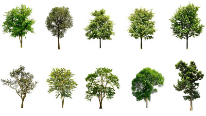 Trees Isolated on a white background, Collection of green trees, Design artwork