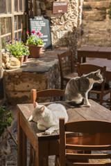 Cats Sitting on Outdoor Restaurant Table in Monemvassia, Peloponnese, Greece