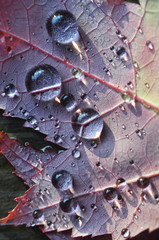 Light reflecting on close up of autumn leaf with raindrops