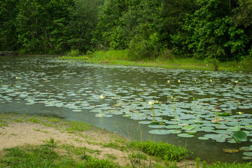 Landscape view with lily pads