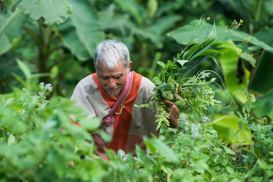 Karen people in his vegetable garden