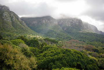 A Forrest in cape town nature reserve with sun beaming therouh the clouds