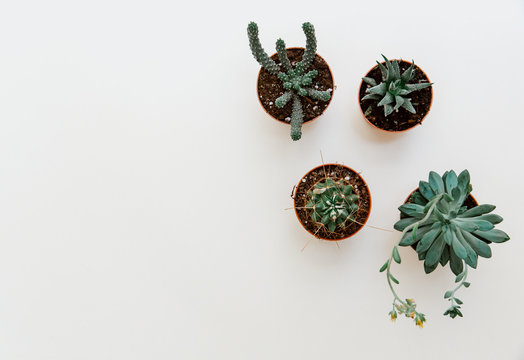 Succulents flowers flat lay. Scandinavian hipster home decoration