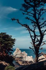 Dead tree by an ocean cove